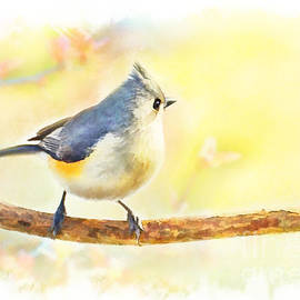 Debbie Portwood - Golden Morning Tufted Titmouse - Digital Paint III
