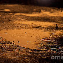 Golden Raindrops At Dusk by Cindy Singleton