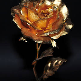 Golden Rose by Dragan Kudjerski