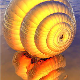 Golden Shell  by Ann Stretton