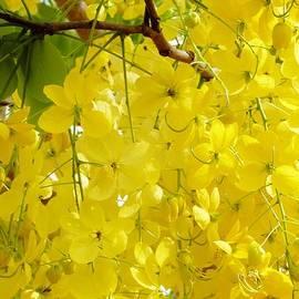 Golden Shower by Amar Sheow