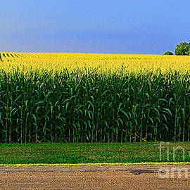 Golden Waves of Grain by Luther Fine Art
