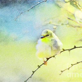 Debbie Portwood - Goldfinch in Golden light - Digital Paint II