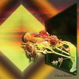 EricaMaxine  Price - Goldfinch OOB