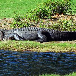 Cynthia Guinn - Golf Course Gator