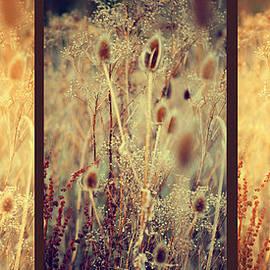 Jenny Rainbow - Golden Shades of Wild Grass. Triptych