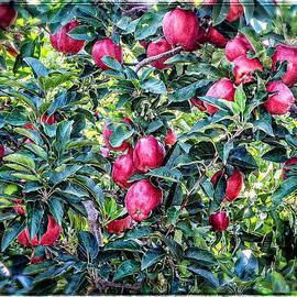 Apple Abundance by Roxy Hurtubise