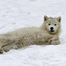 Nina Stavlund - Good Wolfie ...