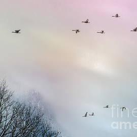 Hannes Cmarits - goose flight