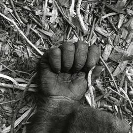 Roderick Bley - Gorilla Hand