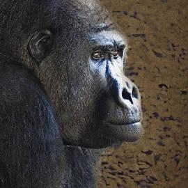 Heiko Koehrer-Wagner - Gorilla Portrait