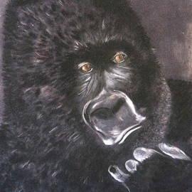 Gorilla by Rosa Garcia Sanchez