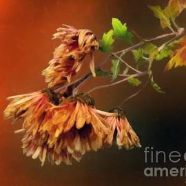 Graceful Fade by RC DeWinter