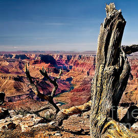 Grand Canyon and Old Tree by Robert Bales