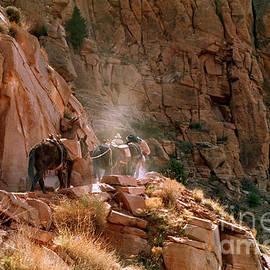 Craig Dykstra - Grand Canyon Mule Train