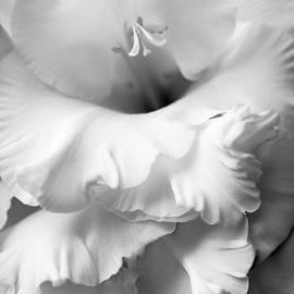 Jennie Marie Schell - Grandiose Gladiola Flower Monochrome