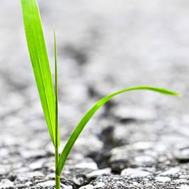 Grass in asphalt by Elena Elisseeva