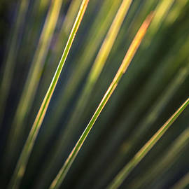 Silken Photography - Grass Tree Green Abstract