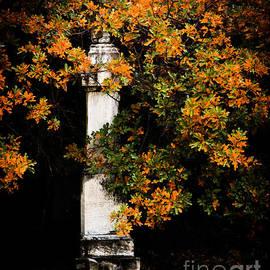 Grave Trees by Sonja Quintero