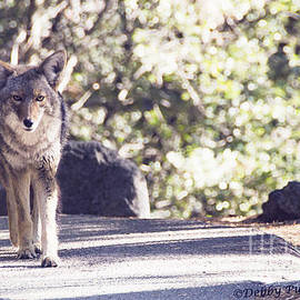 Debby Pueschel -  Coyote and Me at Vernal Falls