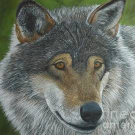 Sid Ball - Gray Wolf