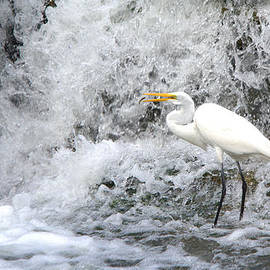 Great Egret Hunting At Waterfall Series 1 by Roy Williams