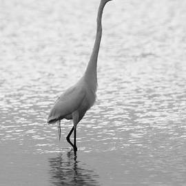John F Tsumas - Great Egret Light