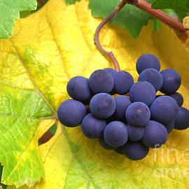 Debra Orlean - Great Grapes