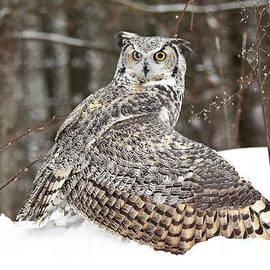Inspired Nature Photography Fine Art Photography - Great Horned Owl Captures Prey