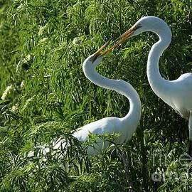 Great White Egret Lovers by Sabrina L Ryan