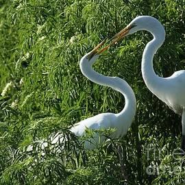 Sabrina L Ryan - Great White Egret Lovers
