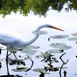 Great White Heron II by Buzz  Coe