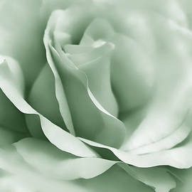 Green Ballerina Rose Flower by Jennie Marie Schell