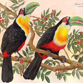 Nelson Caramico - Green-billed Toucan