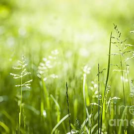 Green grass flowering by Elena Elisseeva
