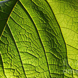 Nancy Mueller - Green Leaf II