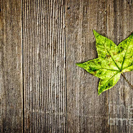 Colleen Kammerer - Green Leaf on Wood