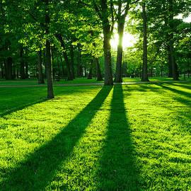 Green park by Elena Elisseeva