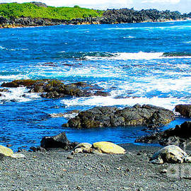 Green Sea Turtles and Black Sand by Jerome Stumphauzer