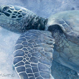 Green Sea Turtle by Randall Scott
