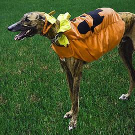 Sally Weigand - Greyhound Dog Costumed
