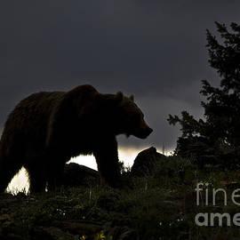 Wildlife Fine Art - Grizzly-animals-image