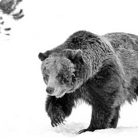 Athena Mckinzie - Grizzly In The Wild II