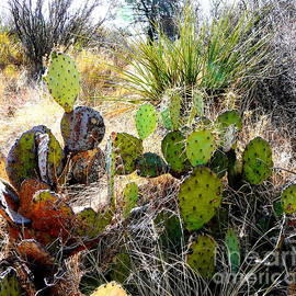 Avis  Noelle - Group of Cacti