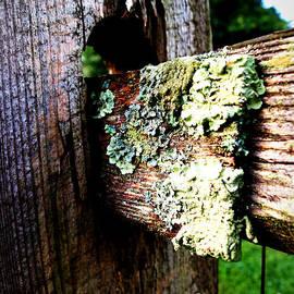Deborah Fay - Growing Country Fence