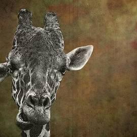 Rudy Umans - Grungy Giraffe 5654 brown