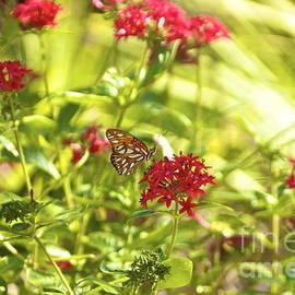 Gulf Fritillary Butterfly by Amazing Jules