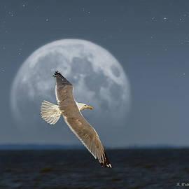 Brian Wallace - Gull Darn Moon