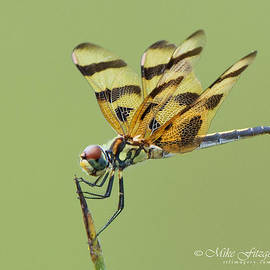 Halloween Pennant by Mike Fitzgerald