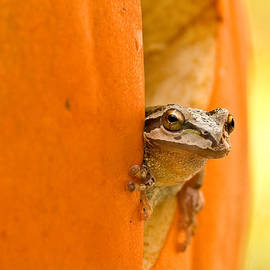 Halloween surprise  by Jean Noren